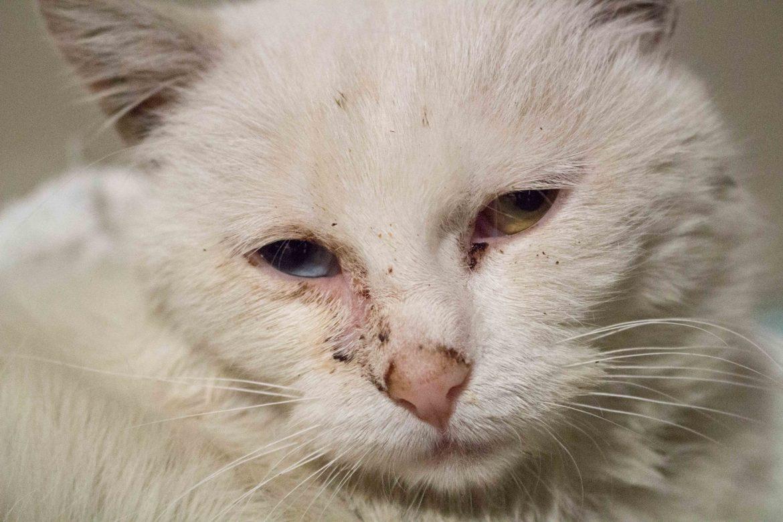 Malá mačička zničená
